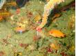 FB魚2匹