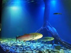 北の大地の水族館6