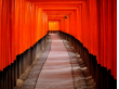 Torii gates at Fushimi Inari Shrine Kyoto