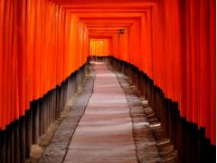 Torii gates at Fushimi Inari Shrine Kyoto