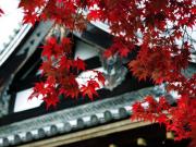 京の紅葉 仁和寺