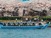 River cruise under sakura cherry trees in Tokyo
