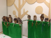 Many owls waiting to meet you at an owl cafe
