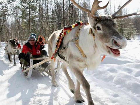 Reindeer_excursion_by_Lapland_Safaris_2