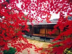プラン6【妙心寺退蔵院】季節御膳