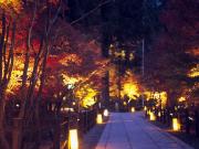 プラン5【永観堂】紅葉夜間3