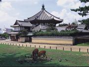 161231_N140_naramachi-02