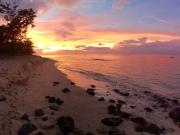 hawaiipolo03