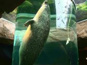 旭山動物園アザラシ