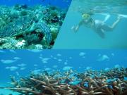 クマノミ&サンゴウォッチングビーチシュノーケル 2
