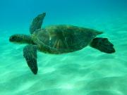 snorkelingdives_flickr