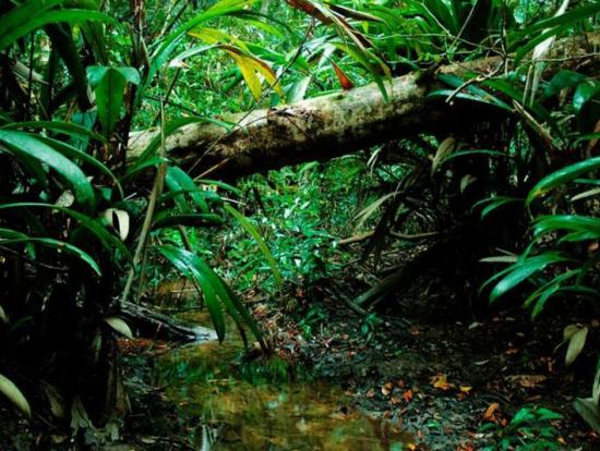 アマゾン・ジャングル サバイバルテクニック教室<昼食付