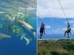 shark_zip