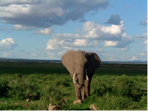 アフリカのサバンナで野生動物を見る