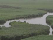 天然記念物指定区域キラコタン岬トレッキング
