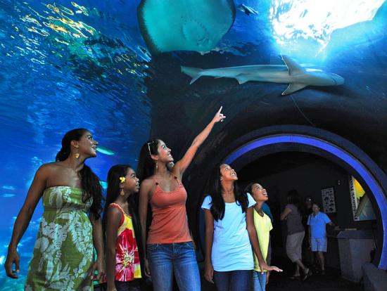 Maui Ocean Center Reviews - TripExpert