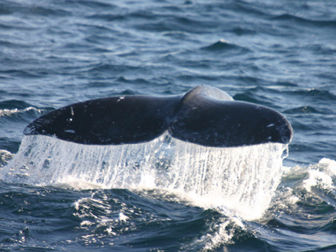 whaletail_water_gallery