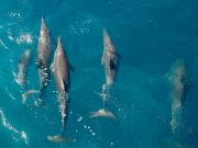 rnicolaidis_flickr_dolphin