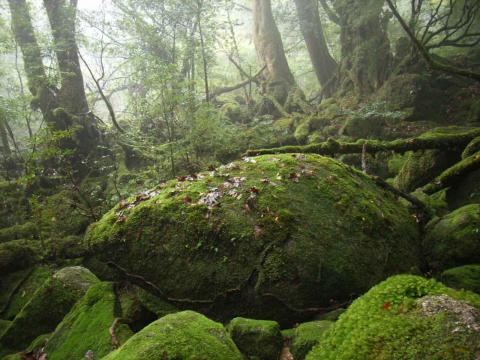 白谷雲水峡-5