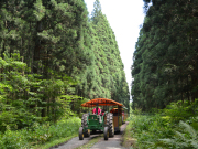 トラクターバスで行く、非公開の森林エリア