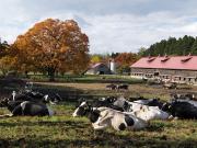 11月上丸牛舎紅葉-3