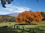 11月上丸牛舎紅葉-1