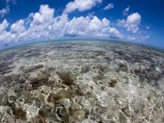メイン画像はての浜)はての浜サンゴ