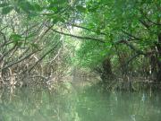 マングローブカヌー&干潟散策