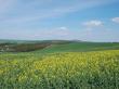 モラヴィア大草原(春)(3)