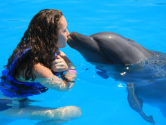 542226_3_SwimmingWithDolphins1