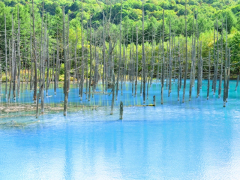 The Blue Pond of Biei, with trees reflecting