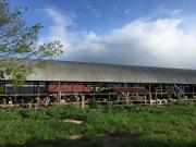 Yotsunomori Cattle Barn early 1980
