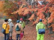 Autumn Leaves Trekking