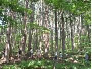 自然散策4-crop