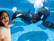 Shamu Underwater Viewing_noWall with GirlCB