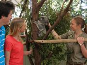 koalahealthcheck1