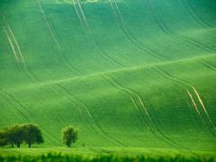 モラヴィア大草原