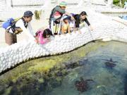 サンゴと海の生き物観察ができるシーカヤックツアー 4