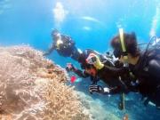 diver (1) (640x427)