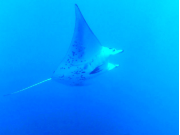 kona_ocean04