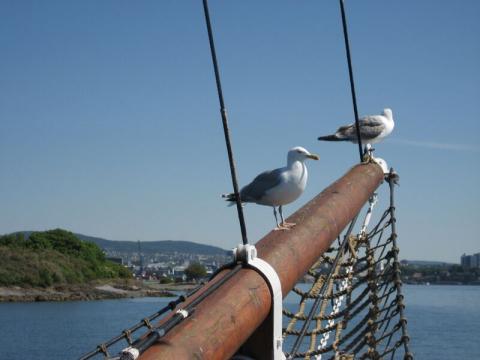 Fjord cruise04