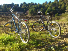Cycling-Wine-Country-1-600x400