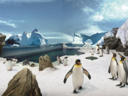 PenguinEncounter_300dpi