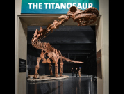 The_largest_dinosaur_ever_discovered