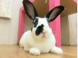 bunny tokyo