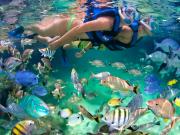 snorkel-31