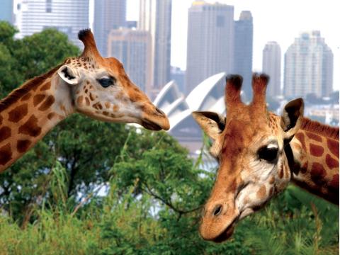 シドニー タロンガ動物園 入園チケット&往復フェリー付き by キャプテンクック
