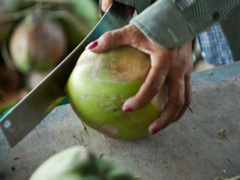 coconut farm image