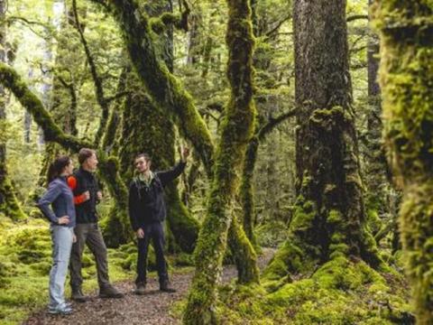 9080-Cascade-Creek-Fiordland-Miles-Holden smaller