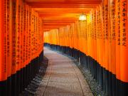 fushimi inari torii1